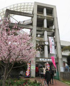 開催の中止が決まった「大倉山さくらまつり」(太尾南公園、2019年3月の開催時)