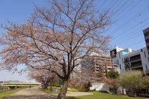 さんかく橋近くの新横浜駅前公園は、まだこれからの木も